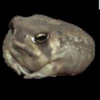 :scribblefrog: